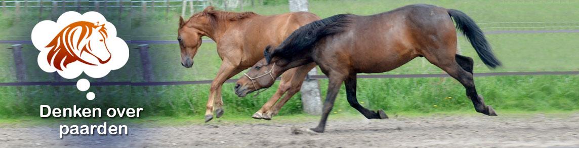 Denken over paarden