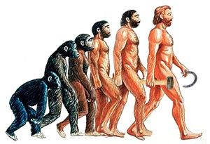evolutie mens