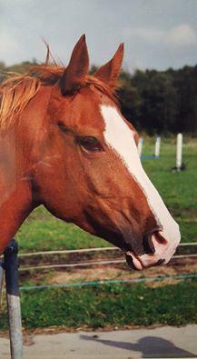 fren-paard
