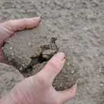 grondmonster