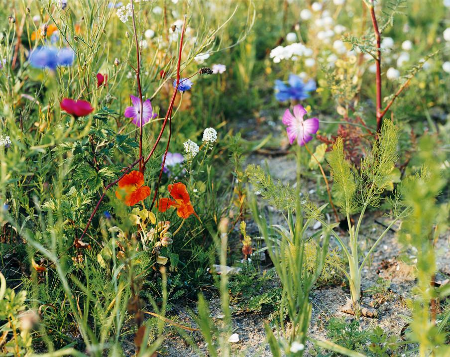 bijen-bloemen