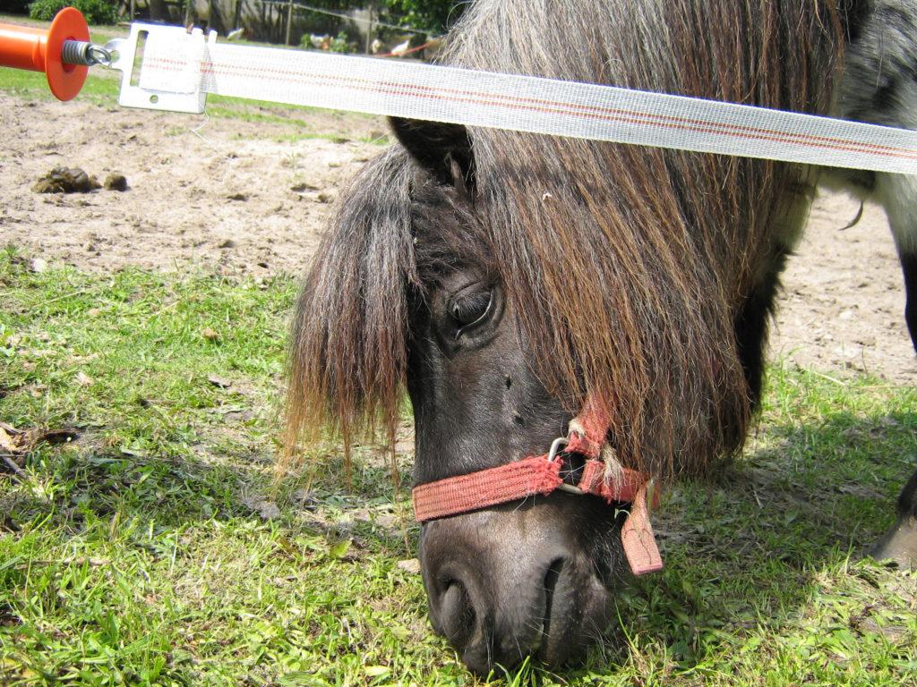 d6696d2add8 Bijvoer voor een paard met jeuk – Denken over paarden